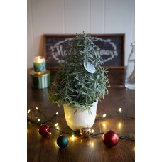 Winter Plant and Flower Sale - Lavender Tree