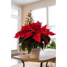 Winter Plant and Flower Sales -